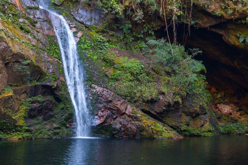 在热带密林掩藏的瀑布在玻利维亚的心脏 免版税库存照片