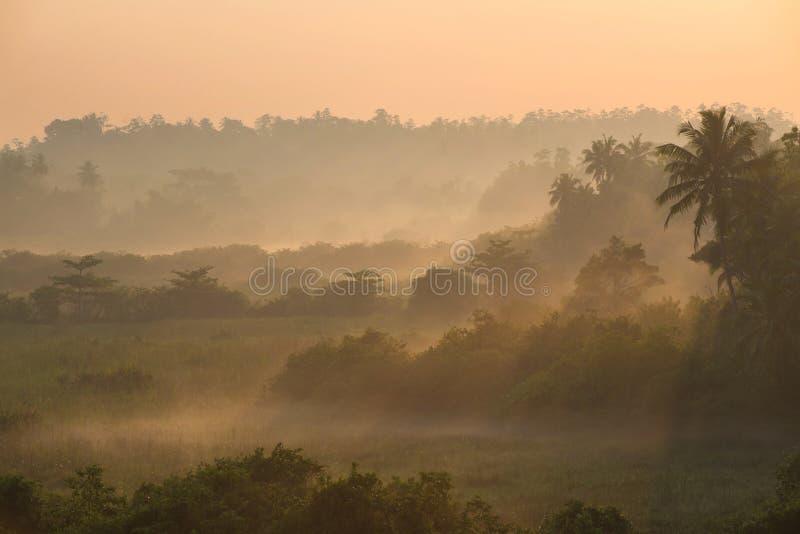 在热带棕榈密林上的日出有太阳的发出光线ang重早晨 库存照片
