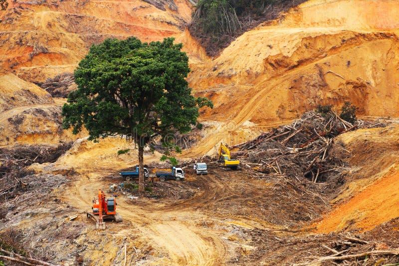 在热带森林内的砍伐森林 免版税图库摄影