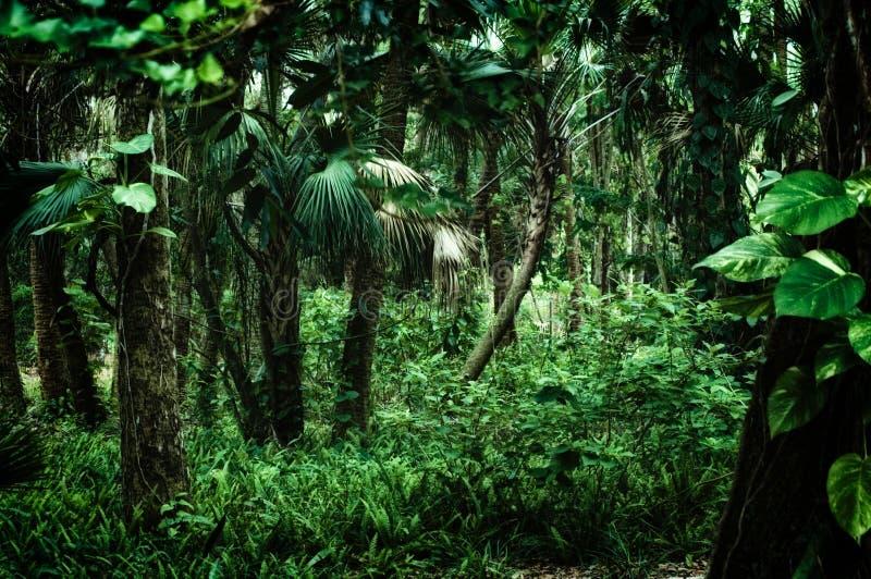 在热带森林里面的晚上 库存照片