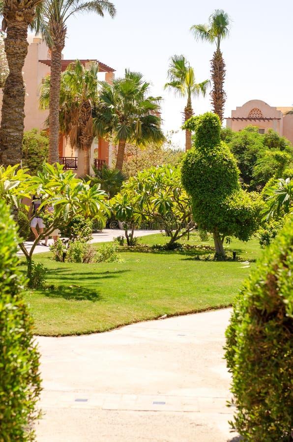 在热带植物和房子中的路 库存照片