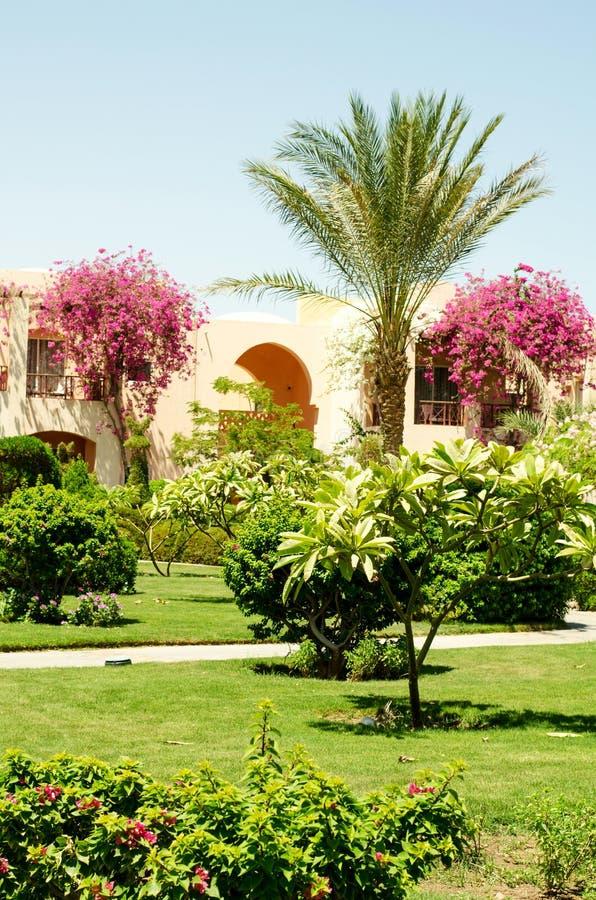 在热带植物和房子中的路 库存图片