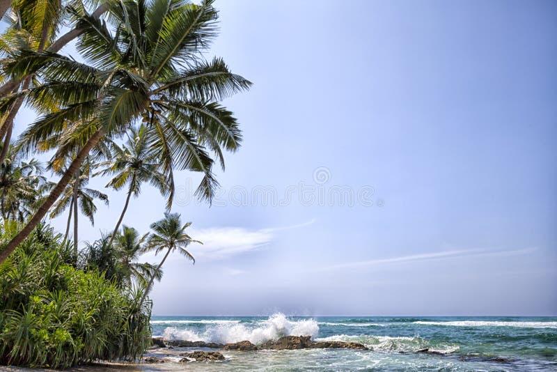 在热带海岛斯里兰卡的浪漫沿海风景 免版税库存照片