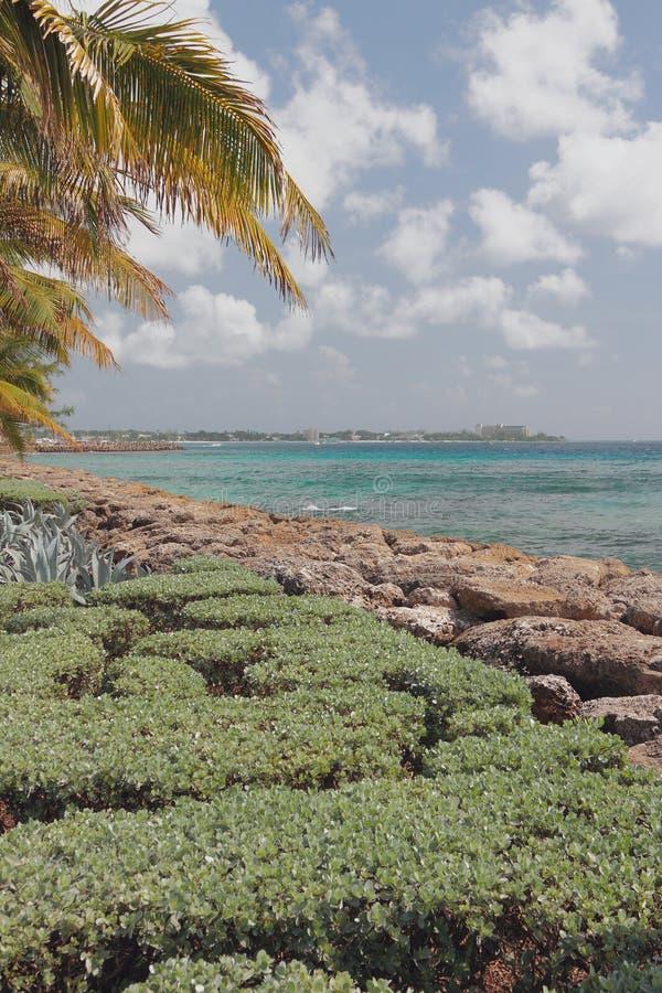 在热带海岛海岸  布里季敦,巴巴多斯 库存图片