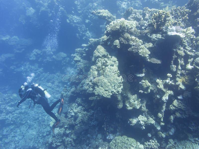 在热带海底部,水下的风景的五颜六色的珊瑚礁 免版税库存图片