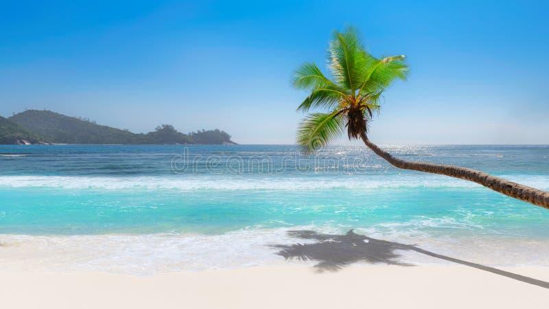 在热带海滩和绿松石海的椰子树 免版税库存照片