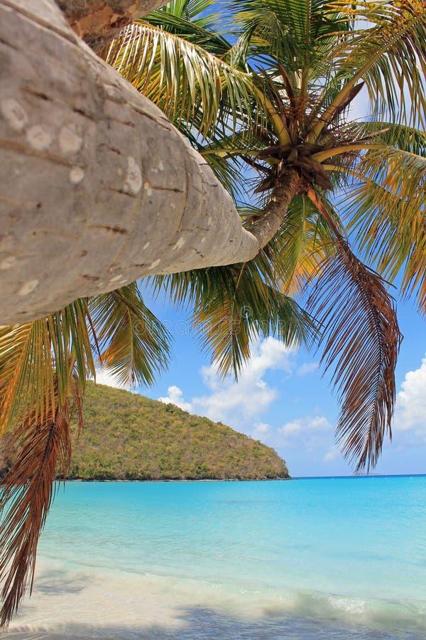 在热带海滩海岛上的棕榈树 库存照片