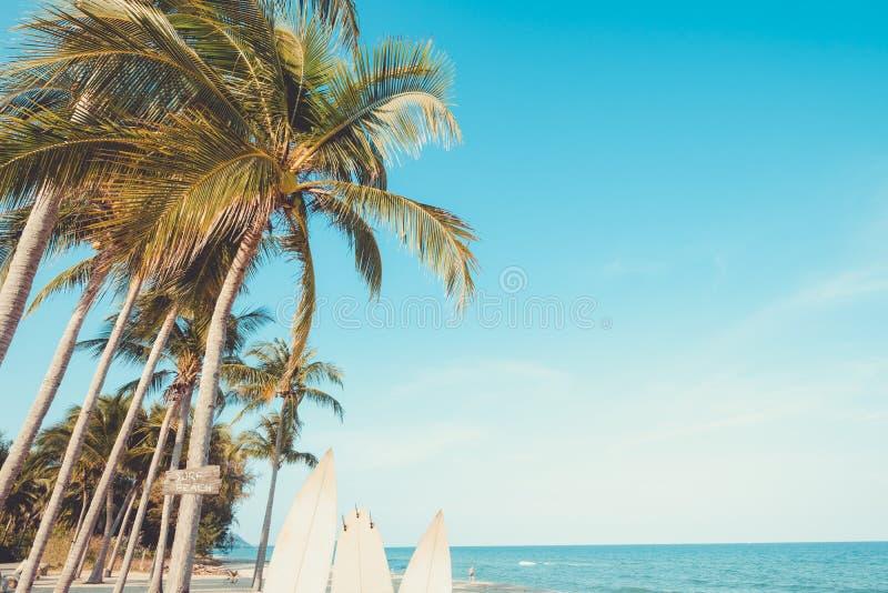 在热带海滩的棕榈树在夏天-冲浪的海滩标志是 图库摄影