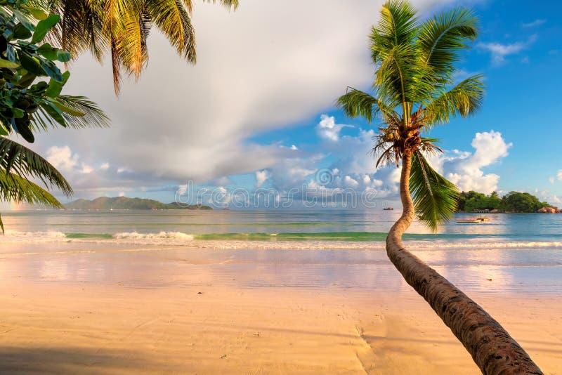 在热带海滩的椰子树在surise在塞舌尔 免版税库存图片