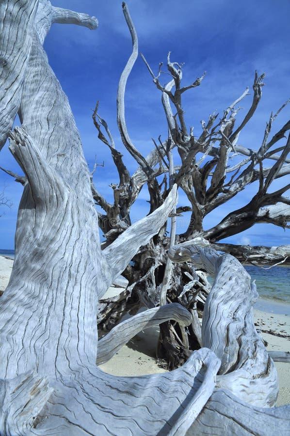 在热带海滩的死的树 r 库存照片