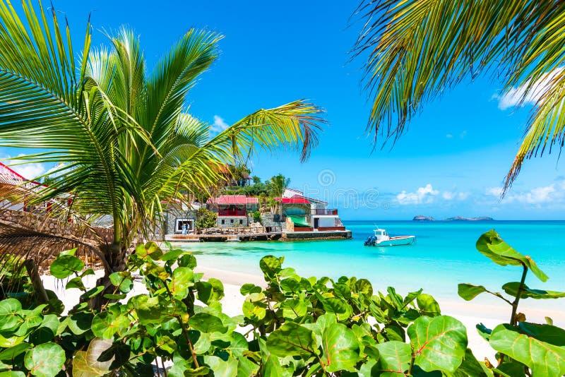 在热带海滩,圣Barths,加勒比岛的棕榈树 库存照片