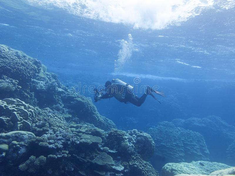 在热带海,潜水者摄影师,水下的风景底部的五颜六色的珊瑚礁  库存图片