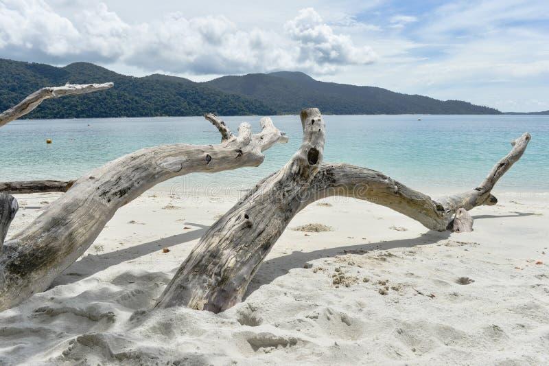 在热带海滩的有趣的死的树 库存照片