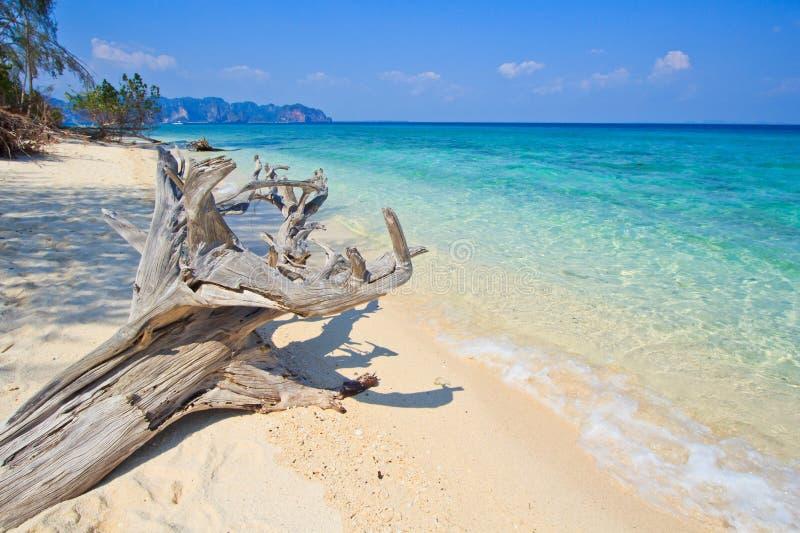 在热带海滩的木头在泰国 免版税库存照片