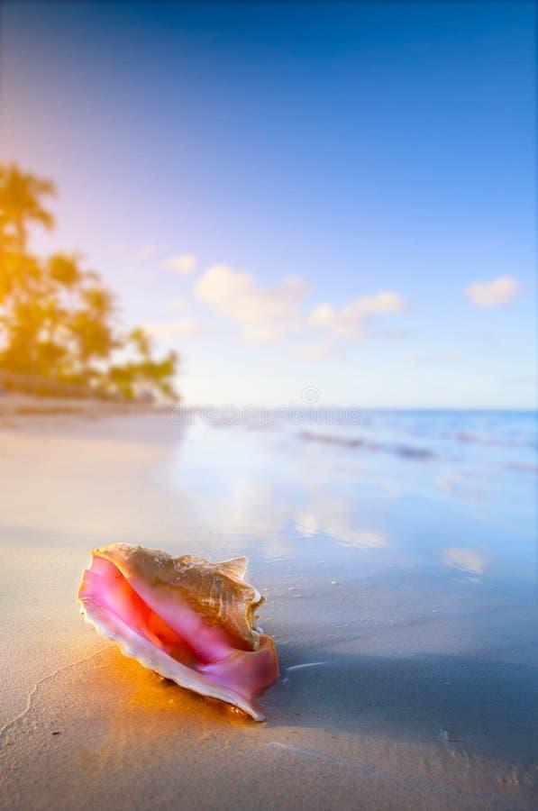 在热带海滩的艺术壳 库存图片