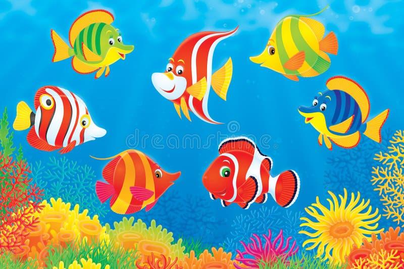 在热带珊瑚鱼的礁石之上 皇族释放例证