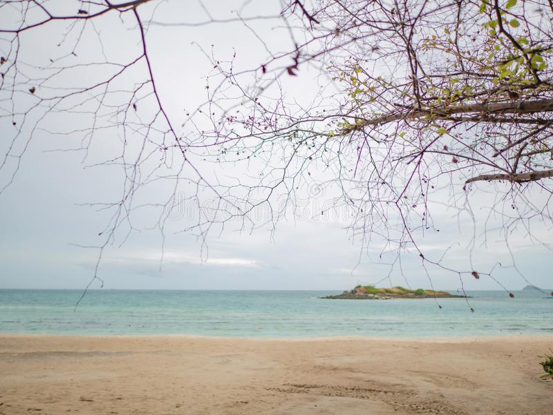 在热带田园诗海滩海洋旁边的美好的树枝自然 免版税库存照片