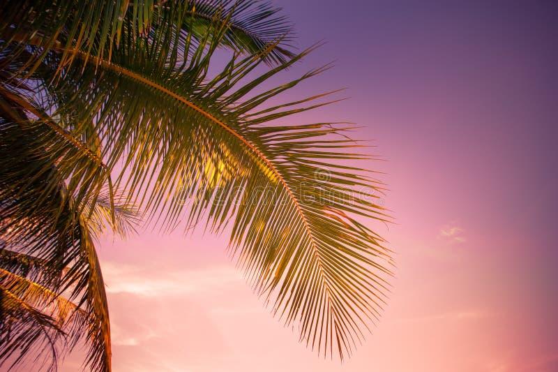 在热带的日落有棕榈树的 免版税库存图片