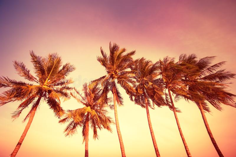在热带的日落 免版税库存照片