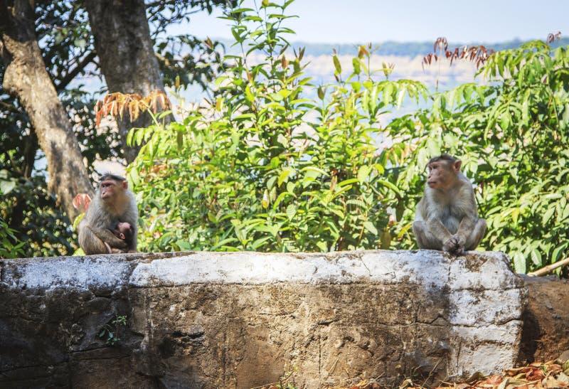 在热带的猴子家庭 图库摄影
