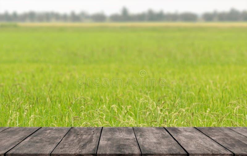 在热的夏季的鲜绿色的米领域在热带与您能安置展示产品的木架子 免版税库存图片