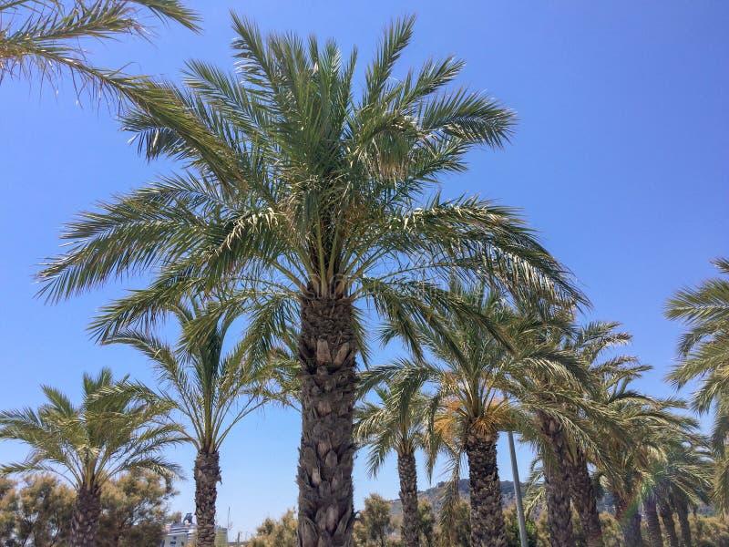 在热的太阳下的棕榈 图库摄影