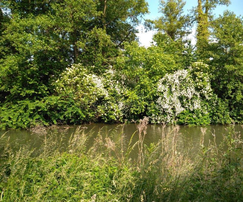 在热的太阳下的河 库存照片