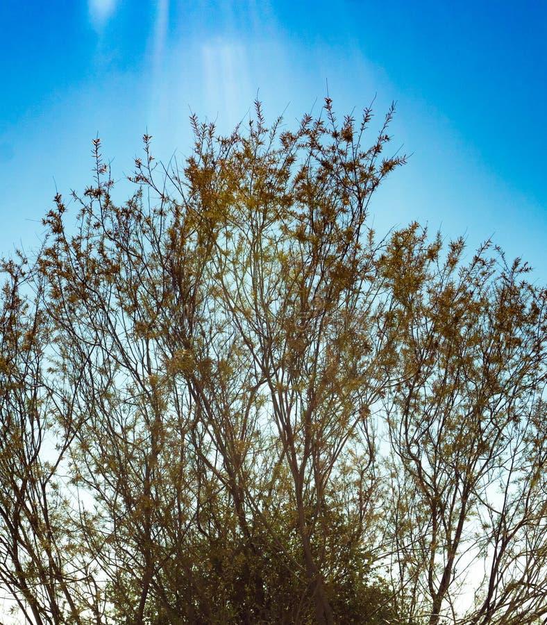 在热的沙漠太阳下的明亮的灌木 图库摄影