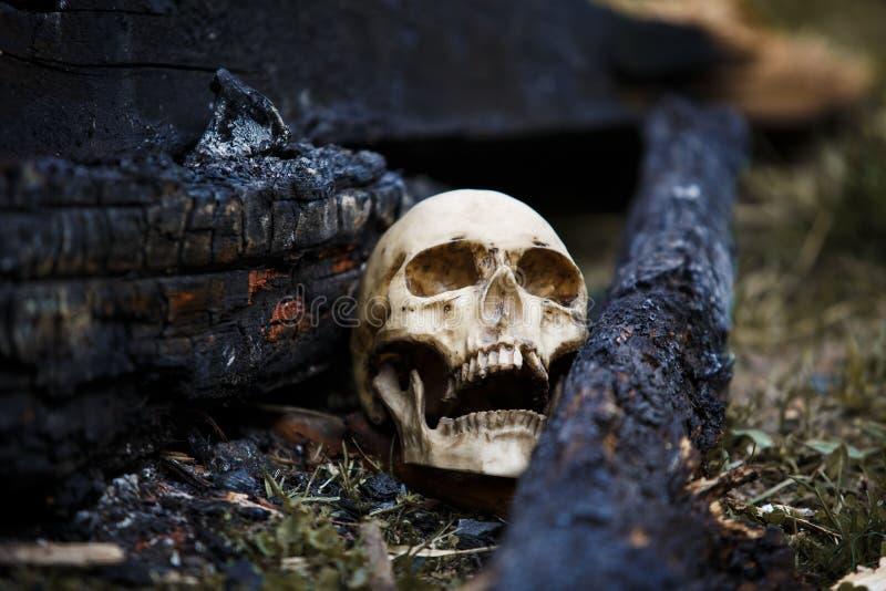 在煤炭中的人的头骨在火的灰 库存图片