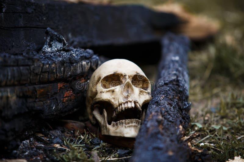 在煤炭中的人的头骨在火的灰 免版税图库摄影