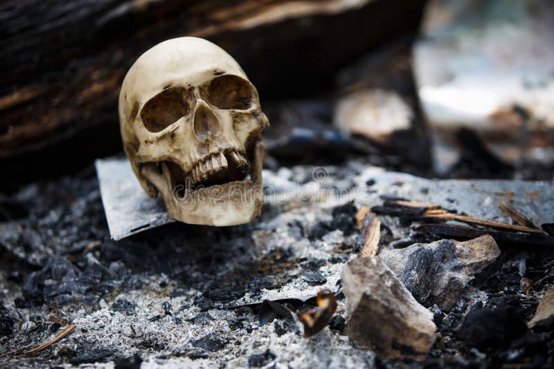 在煤炭中的人的头骨在火的灰 免版税库存照片
