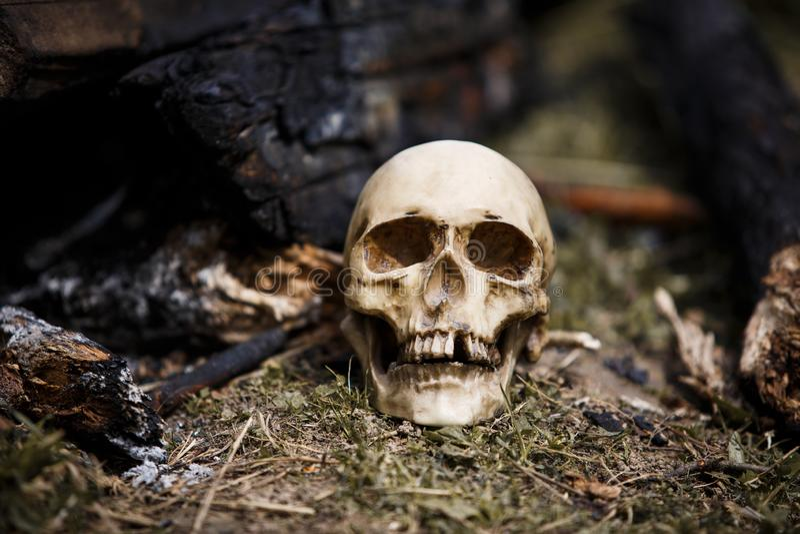 在煤炭中的人的头骨在火的灰 免版税库存图片