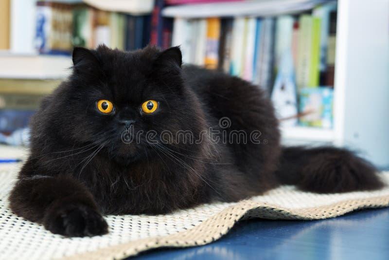 在照片照相机的男性猫展示兴趣 免版税库存图片