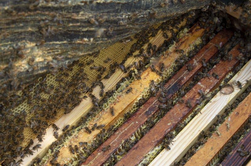 在照片的许多蜂特写镜头 蜂农工作 免版税库存图片