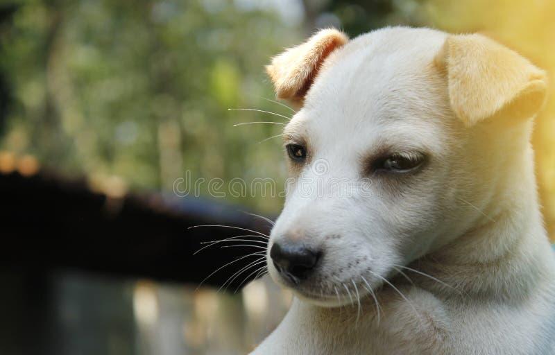 在熟睡的逗人喜爱的小狗 图库摄影