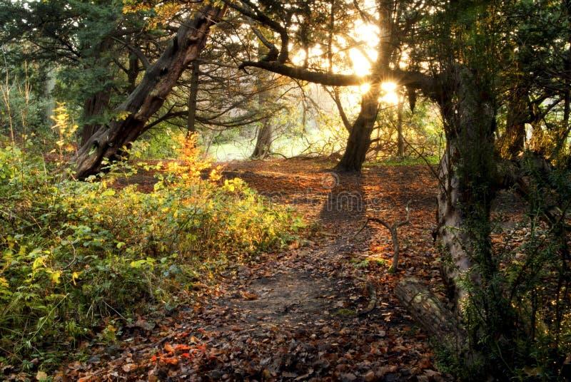 在爱丁堡附近的小森林 免版税库存图片