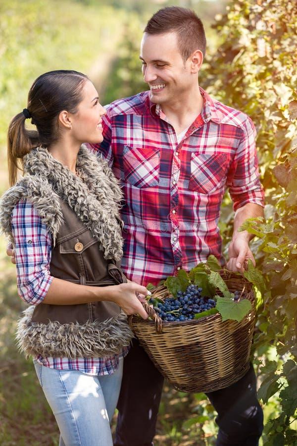在爱在葡萄园里,葡萄收获的季节的夫妇 图库摄影