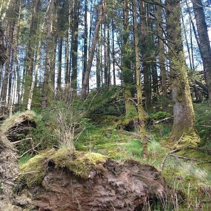 在爱尔兰自然的偷看 库存照片