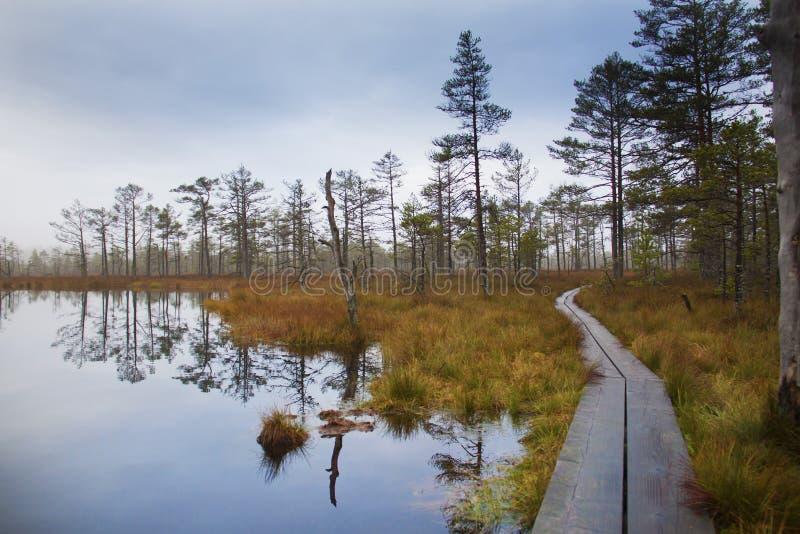 在爱沙尼亚语沼泽的秋天 库存照片