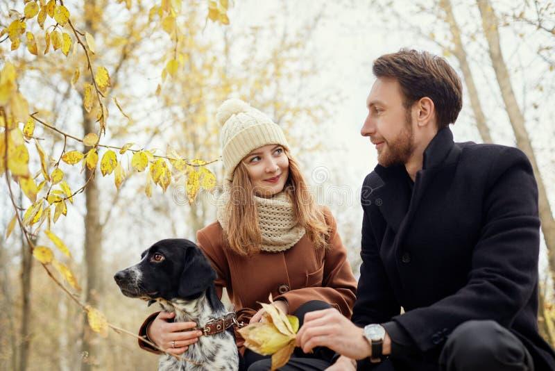 在爱的夫妇在一温暖的秋天天在有一个快乐的狗西班牙猎狗的公园走 爱和柔软在男人和妇女之间 库存图片