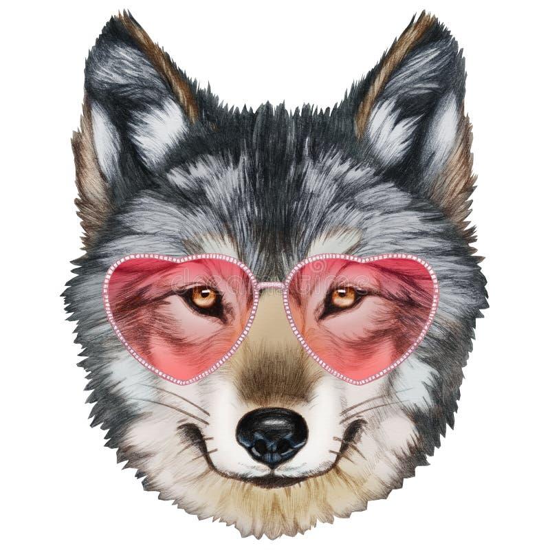 在爱的狼!狼画象与太阳镜的 库存例证