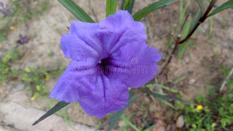 在爱的紫色 图库摄影