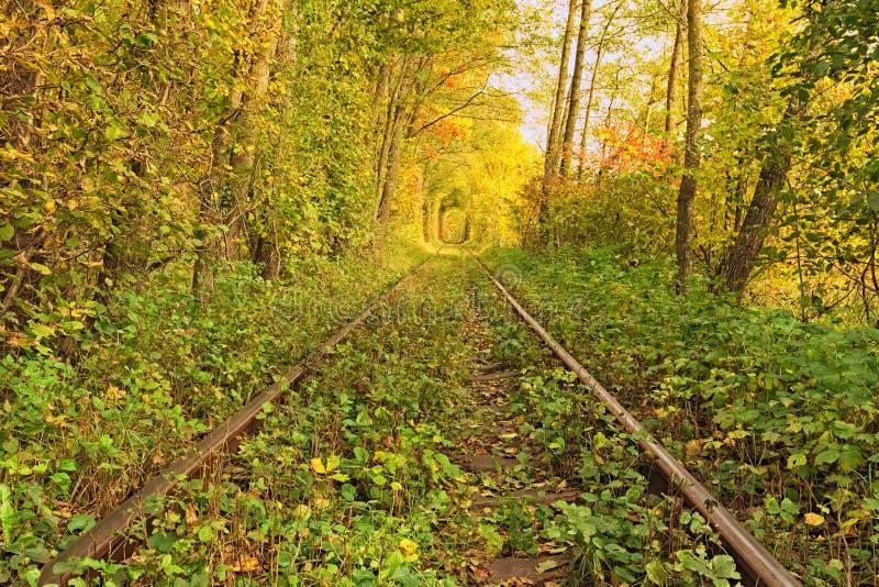 在爱秋天森林著名隧道的一条铁路由树形成了 Klevan, Rivnenska obl 乌克兰 免版税库存照片