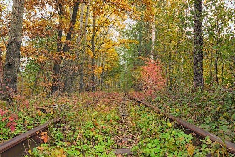 在爱秋天森林著名隧道的一条铁路由树形成了 Klevan, Rivnenska obl 乌克兰 免版税库存图片