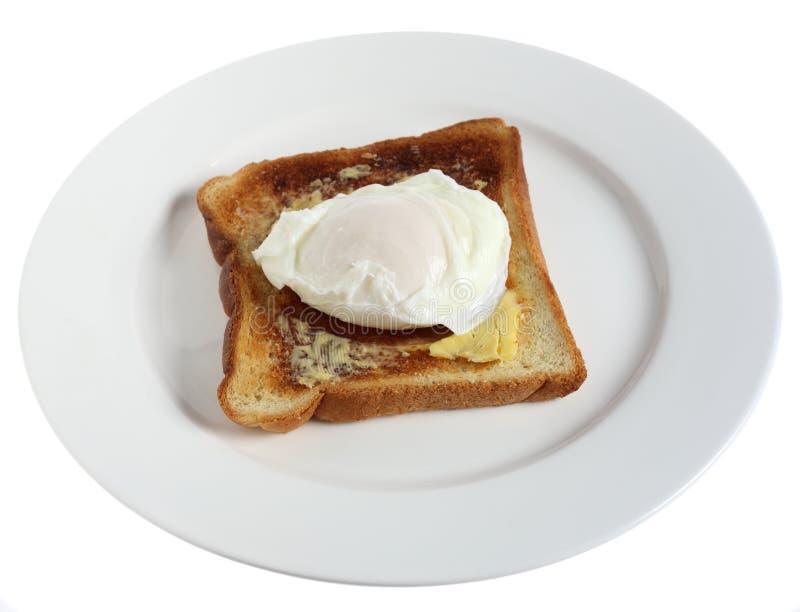 在牌照水煮的白色的鸡蛋 库存照片