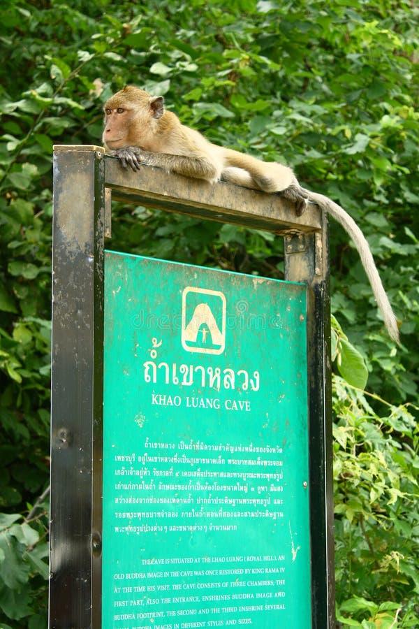 在牌的猴子 免版税库存图片