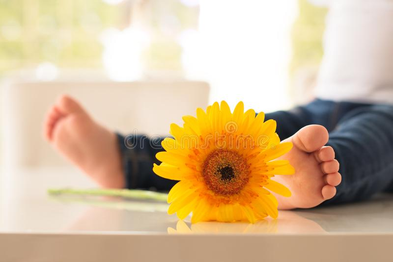 在牛仔裤的婴孩脚在一朵黄色大丁草花旁边 库存照片