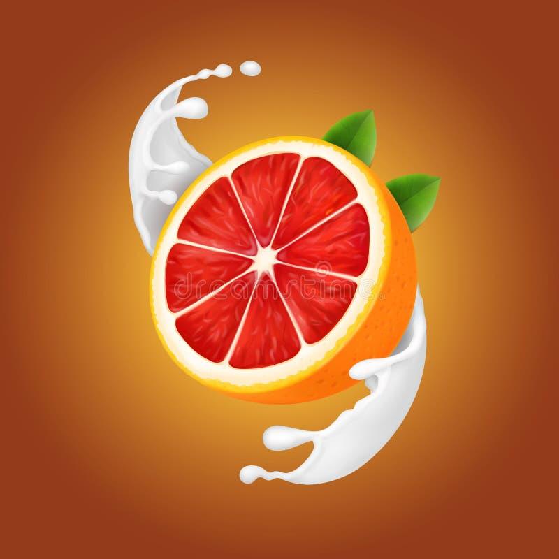 在牛奶或酸奶现实螺旋飞溅的葡萄柚 库存例证