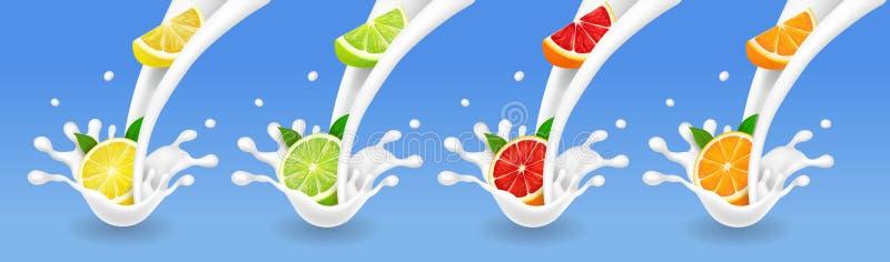 在牛奶流程集合的柑桔 石灰,葡萄柚,柠檬,橙色在酸奶飞溅 现实传染媒介 向量例证