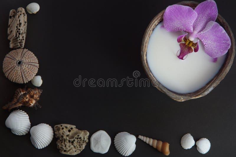 在牛奶的兰花温泉治疗的花在黑暗的背景的一个椰子,准备,壳和海顽童在一黑暗的backgro 免版税图库摄影
